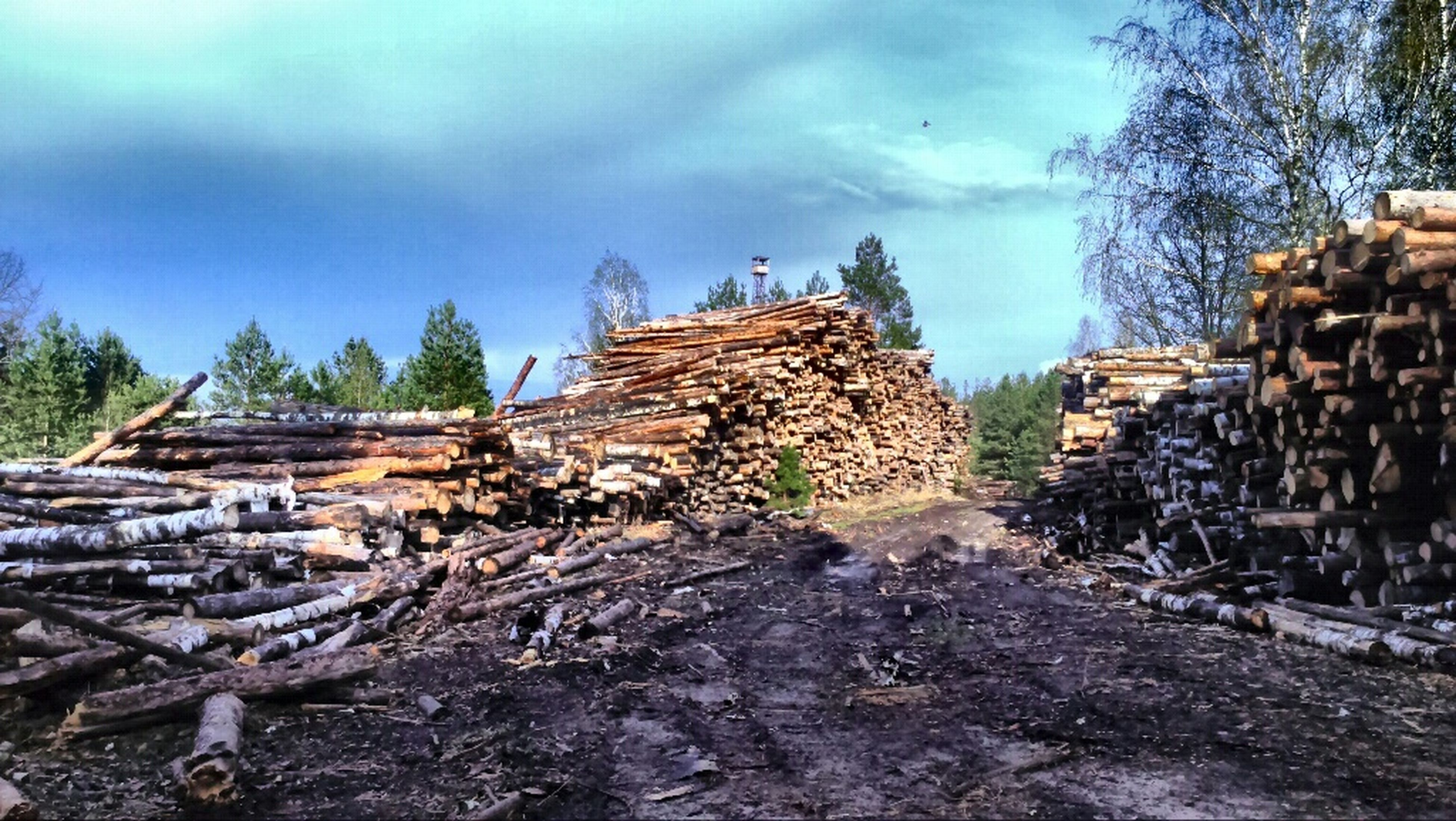sky, cloud - sky, stack, wood - material, log, built structure, tree, firewood, rock - object, stone - object, damaged, cloud, architecture, day, abandoned, large group of objects, the way forward, deforestation, old, abundance