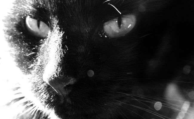 Looking At Camera Creative Photography Creative Light And Shadow Studio Shot Taking Photos Blackandwhite Blackandwhite Photography Black & White Shades Of Grey Monochrome Light And Shadow Black And White From My Point Of View Cat Cats Of EyeEm Pets Corner Animal Themes Boked Animal Portrait