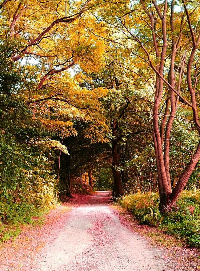 Walk through the forest Nature Reserve Langenfeld Rheinland Forest Autumn Tree The Way Forward Nature Footpath Beauty In Nature Outdoors Orange Color Landscapes Still Life LandscapeIdyllic No People Landscape_photography Change Trees Impression Nature Photography Naturelovers Nature_collection