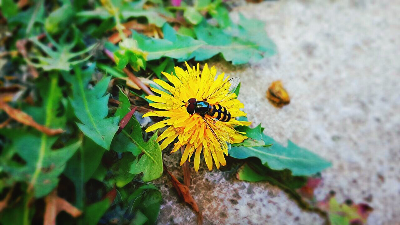 Beautiful stock photos of bee, Beauty In Nature, Bee, Day, Flower