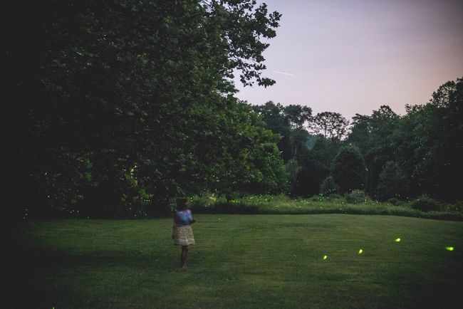 Hundreds of Fireflies light up a Pennsylvania Landscape Fine Art Photography