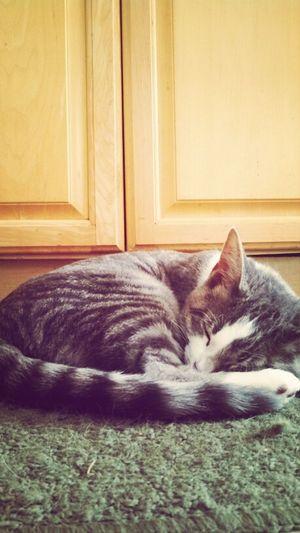 dawww hey buddy. (: Kitten