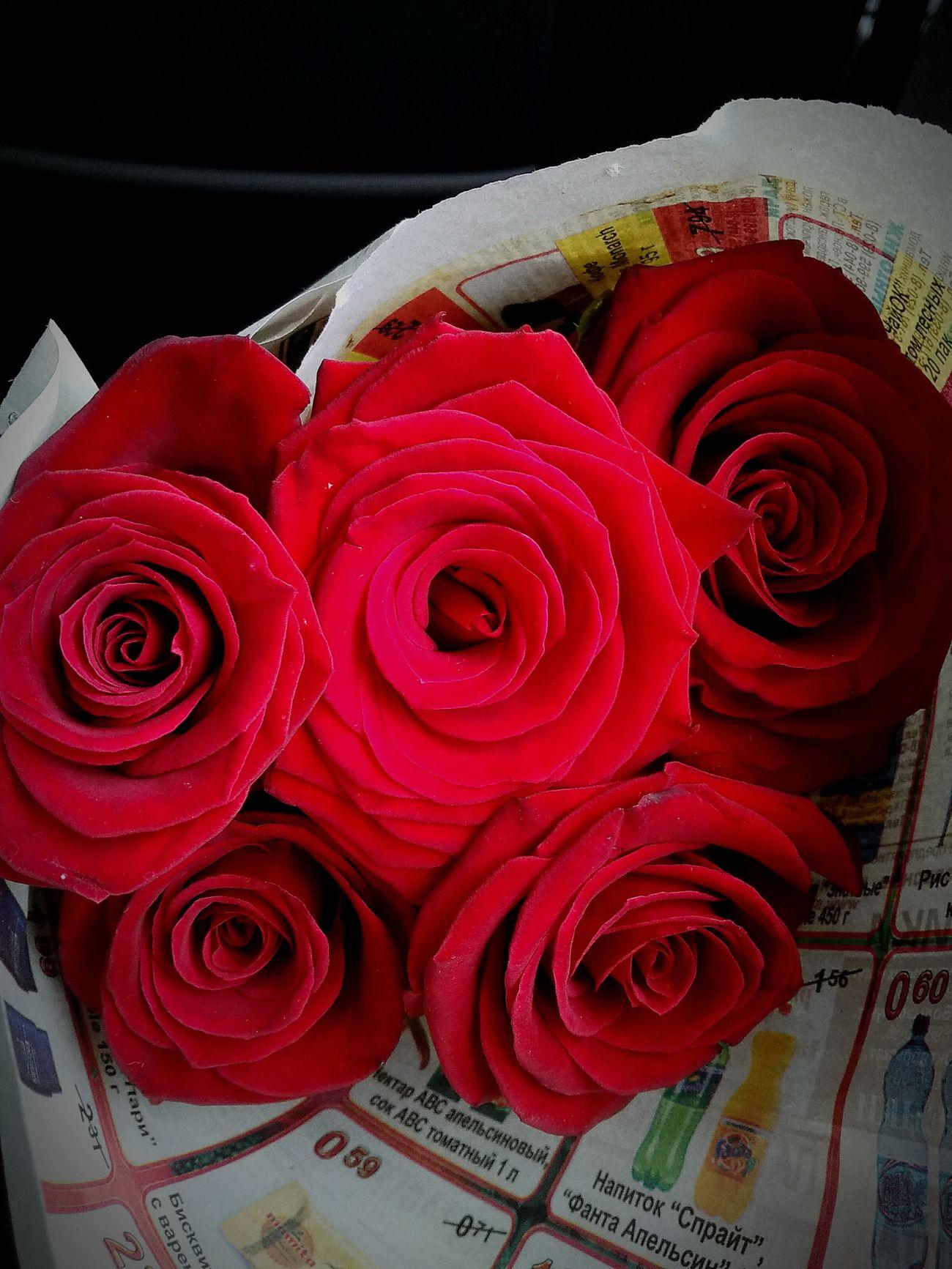 Beatufulflowe Rose - Flower Red Flower