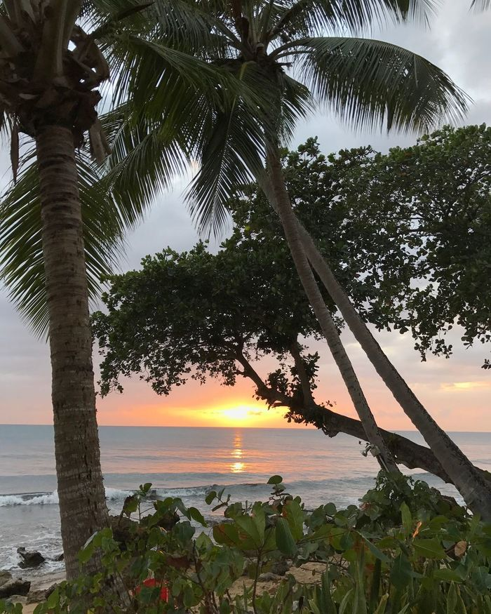 Sea Tree Beach Sunset Palm Tree Vacations Tourism Water Scenics Horizon Over Water Nature No People Postcard Outdoors Rincon Puerto Rico Ocean View Ocean Rincon Puerto Rico Calm Peace And Quiet Peaceful Peace Peaceful Place Tranquility