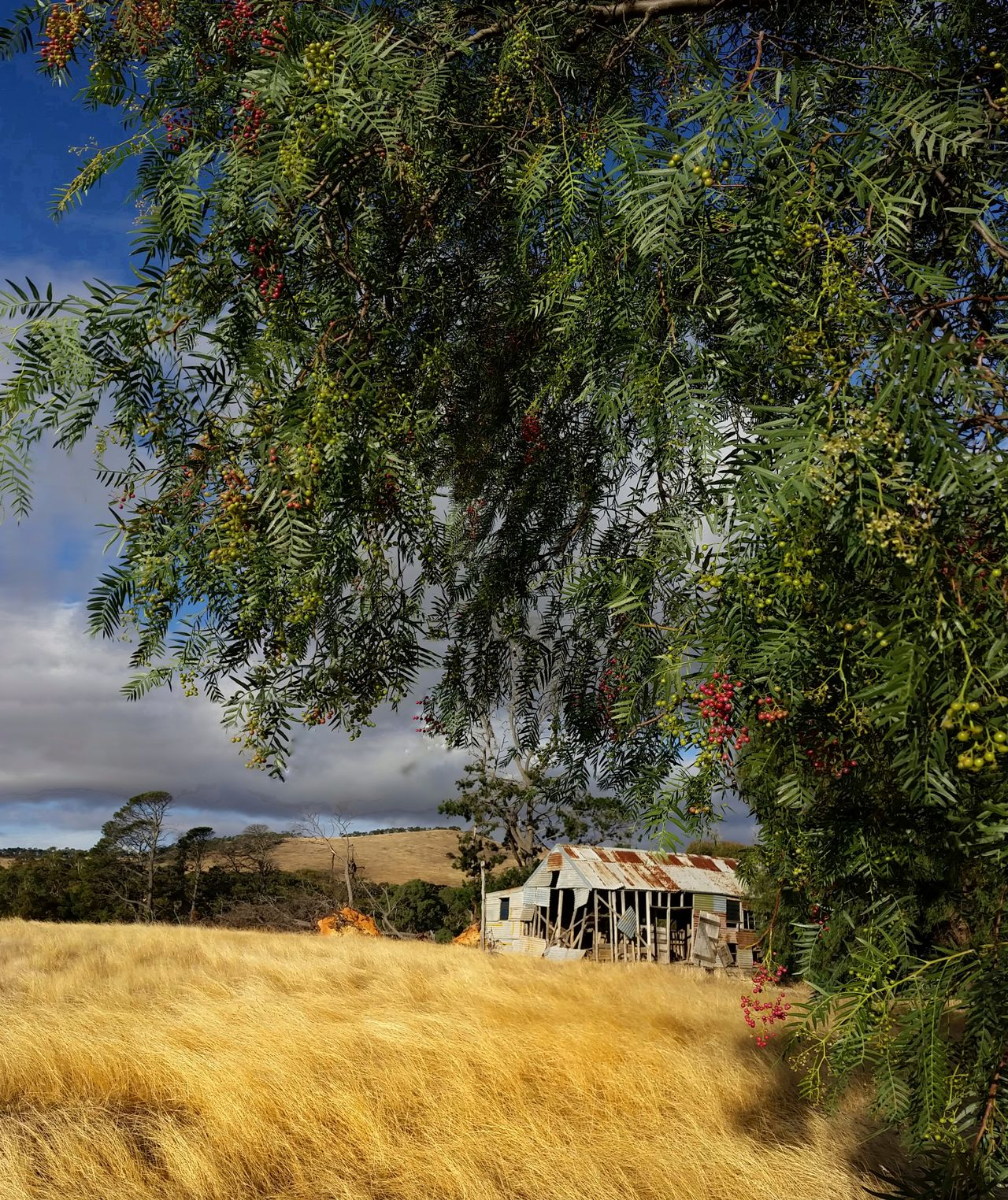'The Old Woolshed & the Pepper Tree.' (Mini series 2) Abandoned Buildings Shearingshed Farmlife Australian Landscape Farm Life Dramatic Landscape Eye4photography  EyeEm Nature Lover EyeEm Masterclass EyeEm Gallery Tadaa Community Golden Hour Australian Photographers Beauty In Nature Abandoned Eyeemmasterclass My Cloud Obsession☁️ Exceptional Photographs Derelict Beauty Of Decay EyeEm Nature Lovers No People EyeEmNewHere Victoria Australia