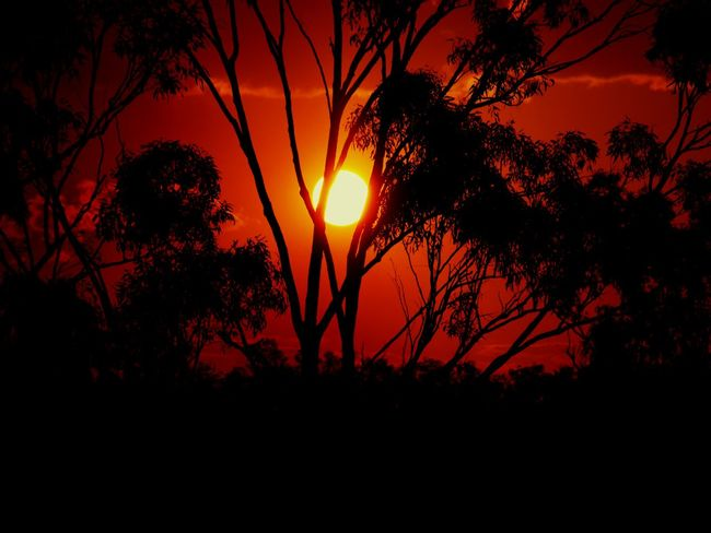 Sunset Silhouette Tree Scenics Sun Tranquil Scene Beauty In Nature Tranquility Branch Nature Plant Orange Color Growth Idyllic Sky Majestic Outdoors Outline Solitude Cloud Sunset✨trees✨ Sun Collection Eyeemphotography Sun Portrait