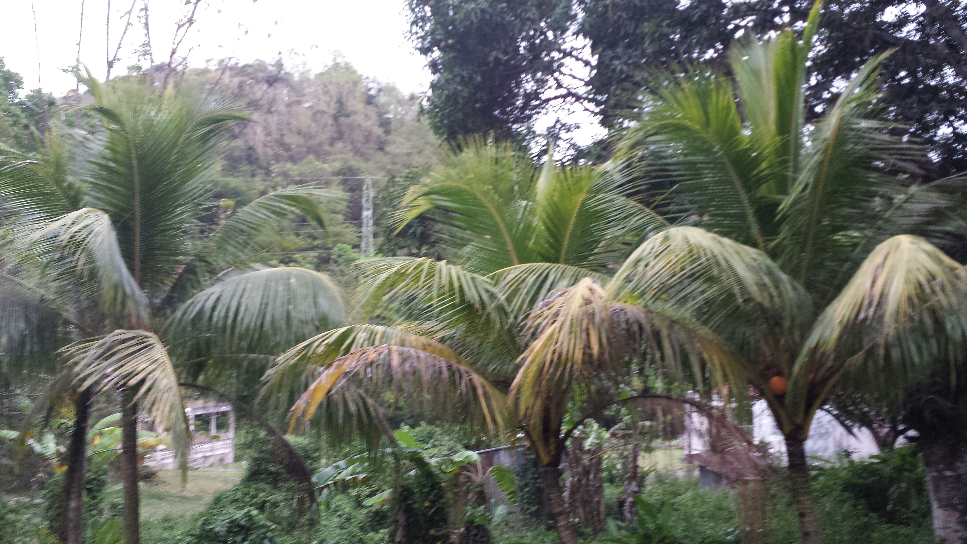 palm tree, tree, growth, nature, green color, beauty in nature, tranquility, plant, tranquil scene, tree trunk, tropical climate, scenics, growing, cactus, green, coconut palm tree, outdoors, day, leaf, no people