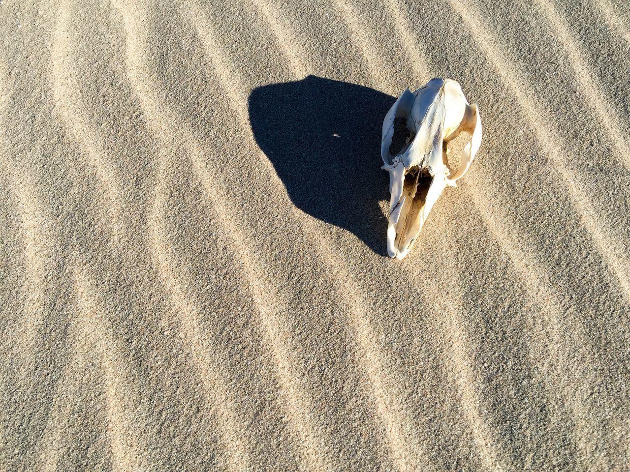 Beautiful stock photos of totenkopf, Abandoned, Animal Bone, Animal Skeleton, Animal Skull