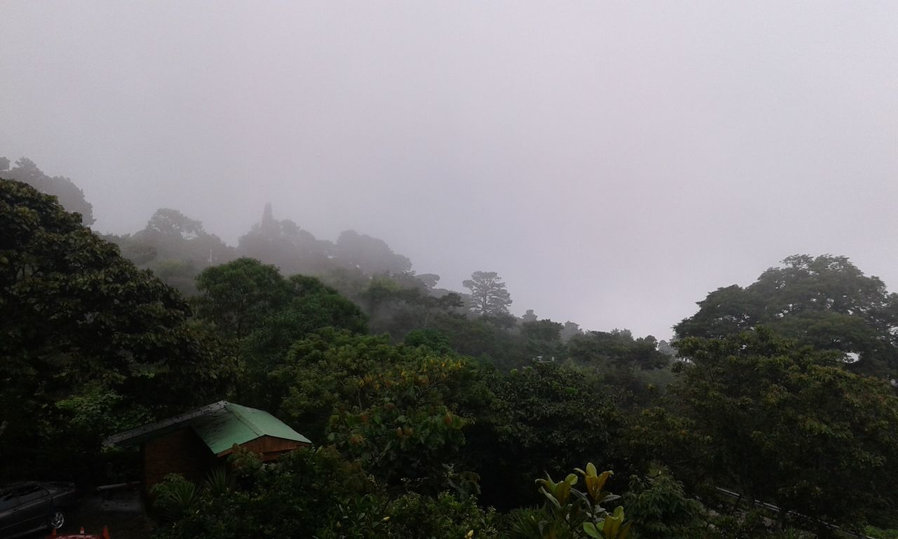 Hermoso Paisaje Neblina Genial Vegetacion Lluvia