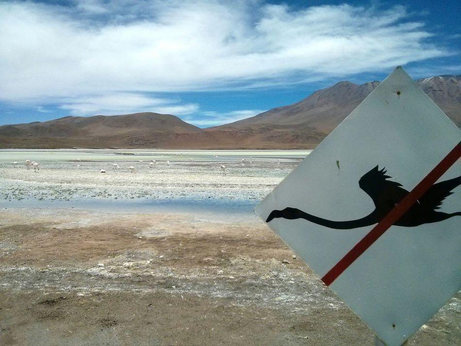 NO FLY ZONE. · Bolivia Landscape Nature Lake Flamingoes Flamingos Birds Sign Unedited
