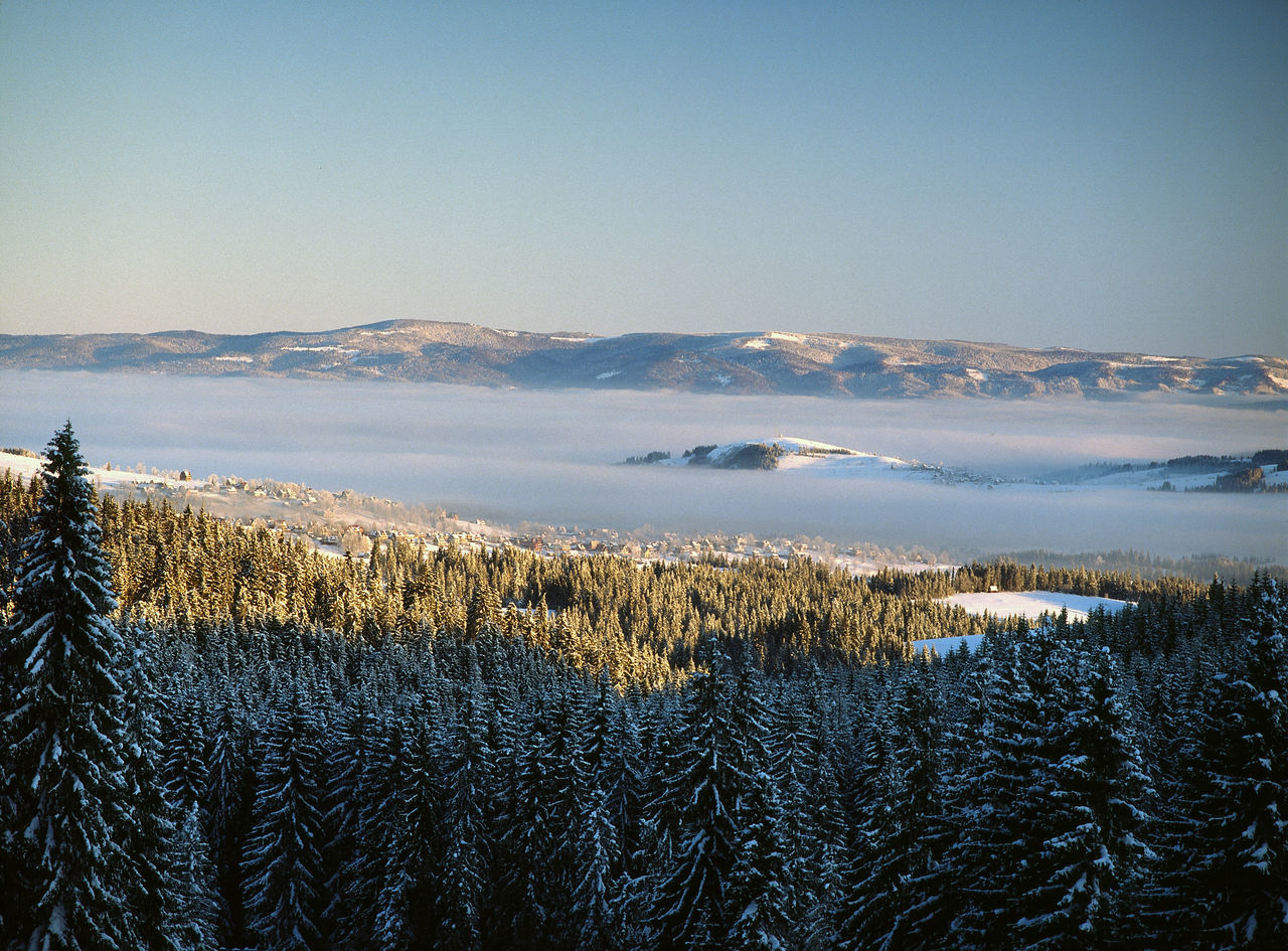 Day Forest Inversion Meteorology Mountain Nature Outdoors Podhale Podhale Poland Polen Scenics Visibility Winter