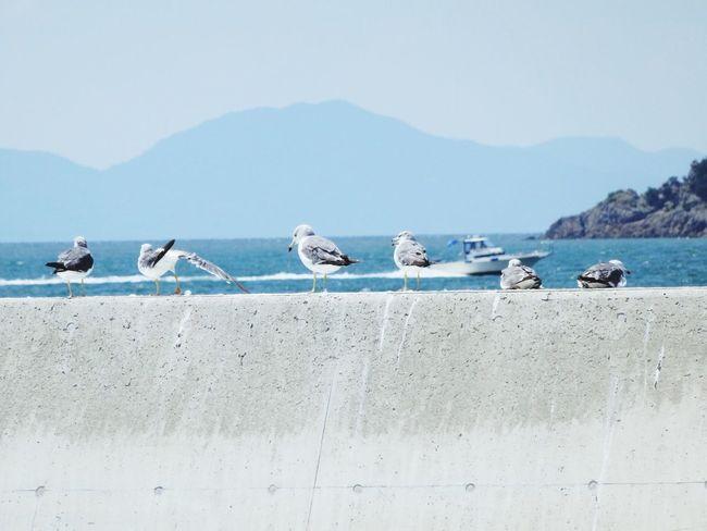Japan Kashirajima 頭島 Summerdays  Seaside Seabirds Ship Sea And Sky Birds Animals