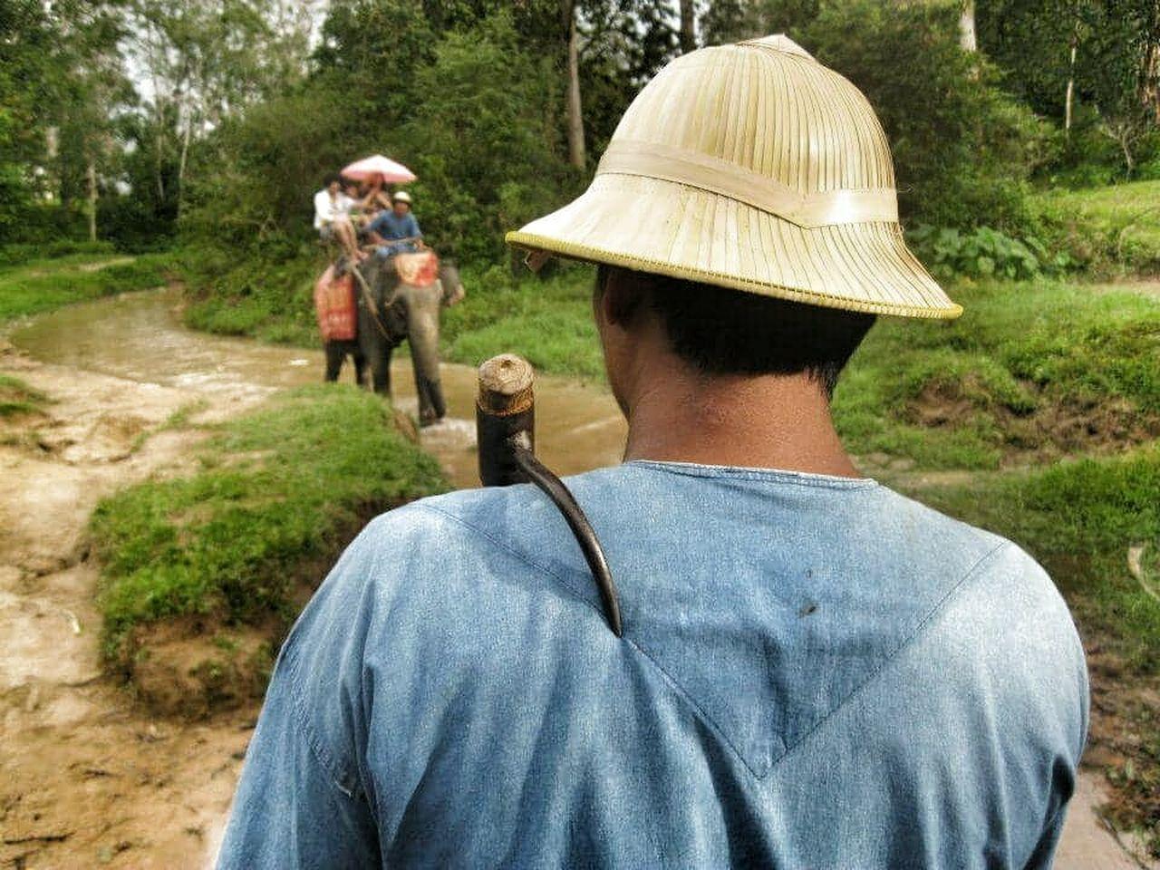 Animalabuse Elephant Elephant Trekking Hook Pain Tree Nofreedom Forest