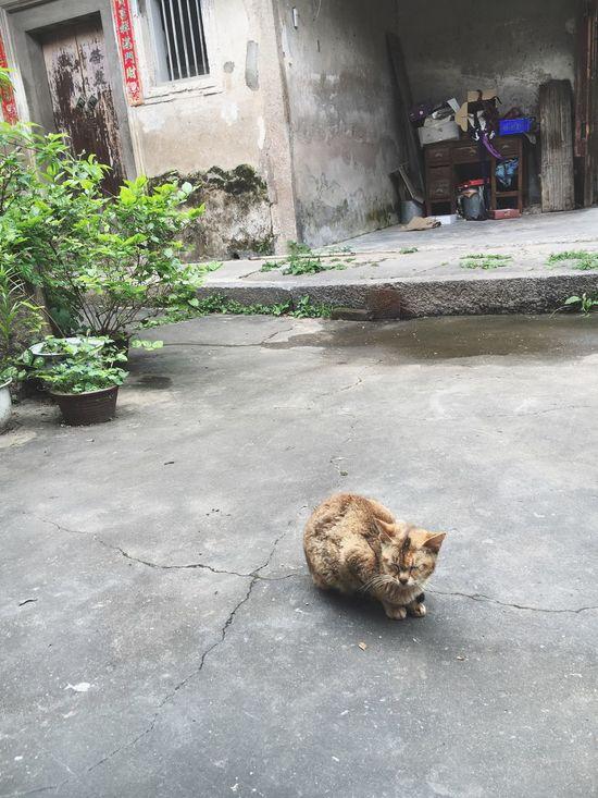 What Lies Beneath Nobody's Cat