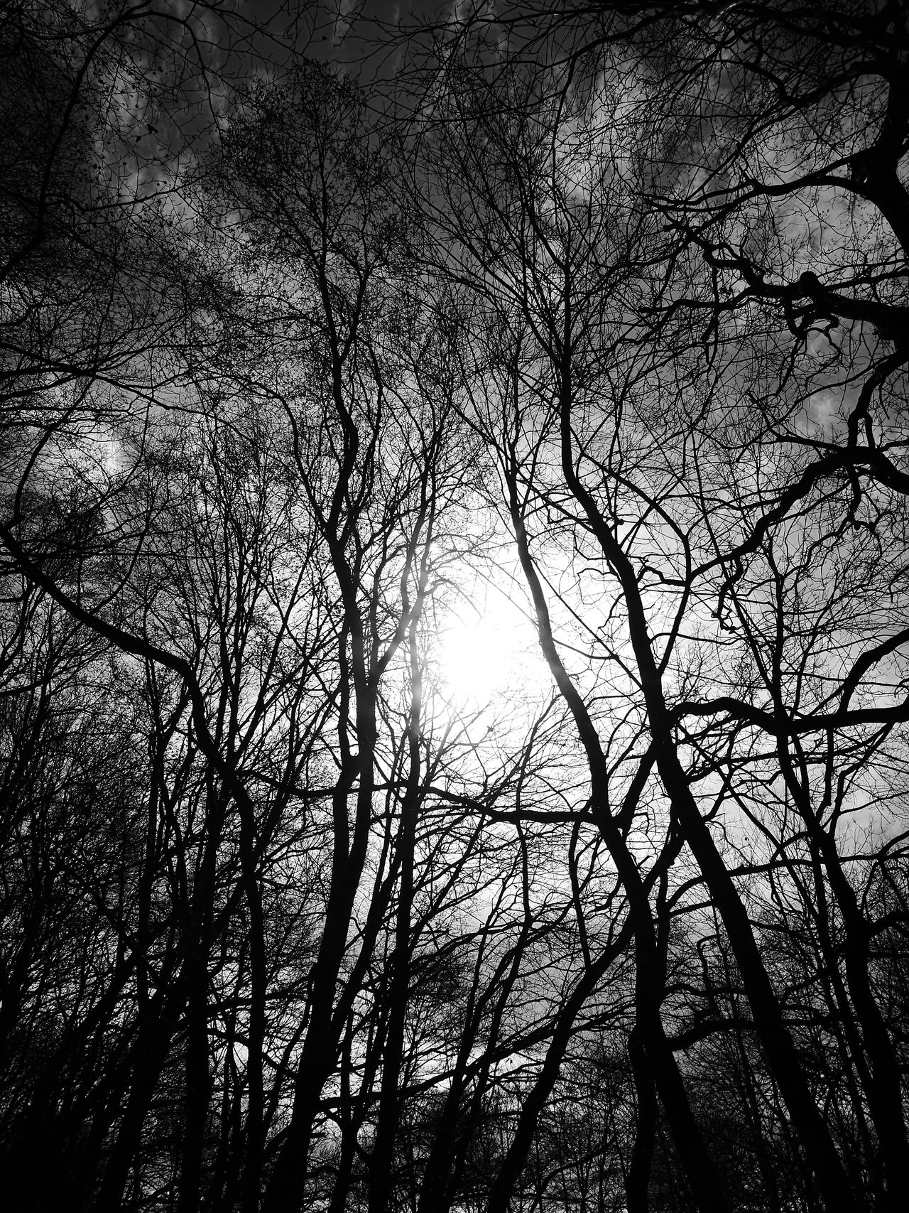 Low Angle View From My Point Of View Check This Out Tranquility Exceptional Photographs Beauty In Nature Nature No People Full Frame EyeEm Gallery Taking Photos Black & White Outdoors Sky Blackandwhitephotography Monochrome Tree Day EyeEm Best Shots Sun_collection