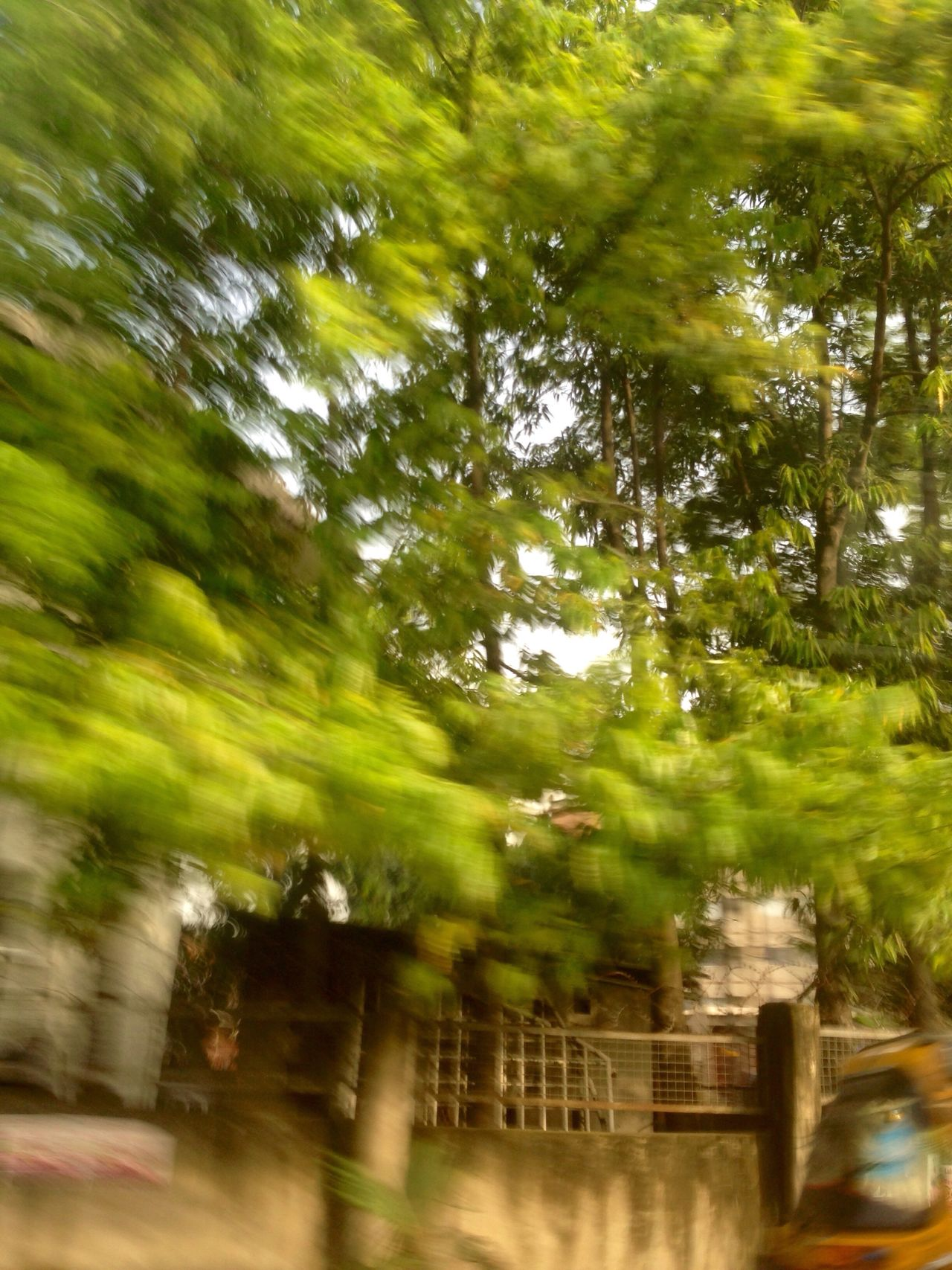 Blurred Motion Blurry Blurred Photos. Motion Ontheroad Drivebyphotography Driving Tree Trees Outdoors Outdoor Outdoor Photography No People Nature Day Nigeria Green Green Color In Motion Art Art Is Everywhere Beauty In Nature