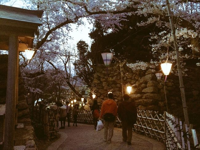 Sakura2015 Sakura 今年も桜が綺麗です。やっと花見ができました