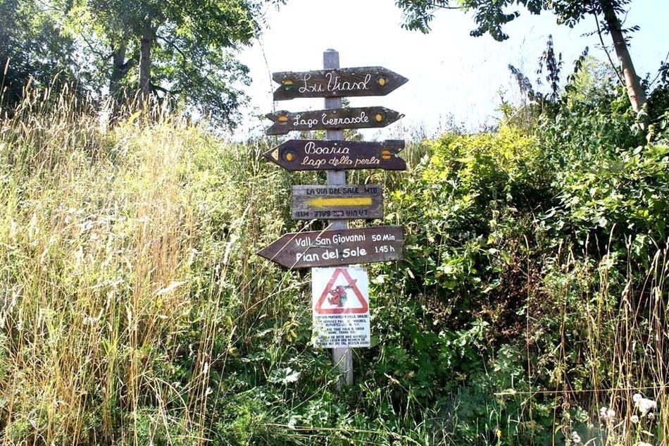 Nature Grass Direction Signboard