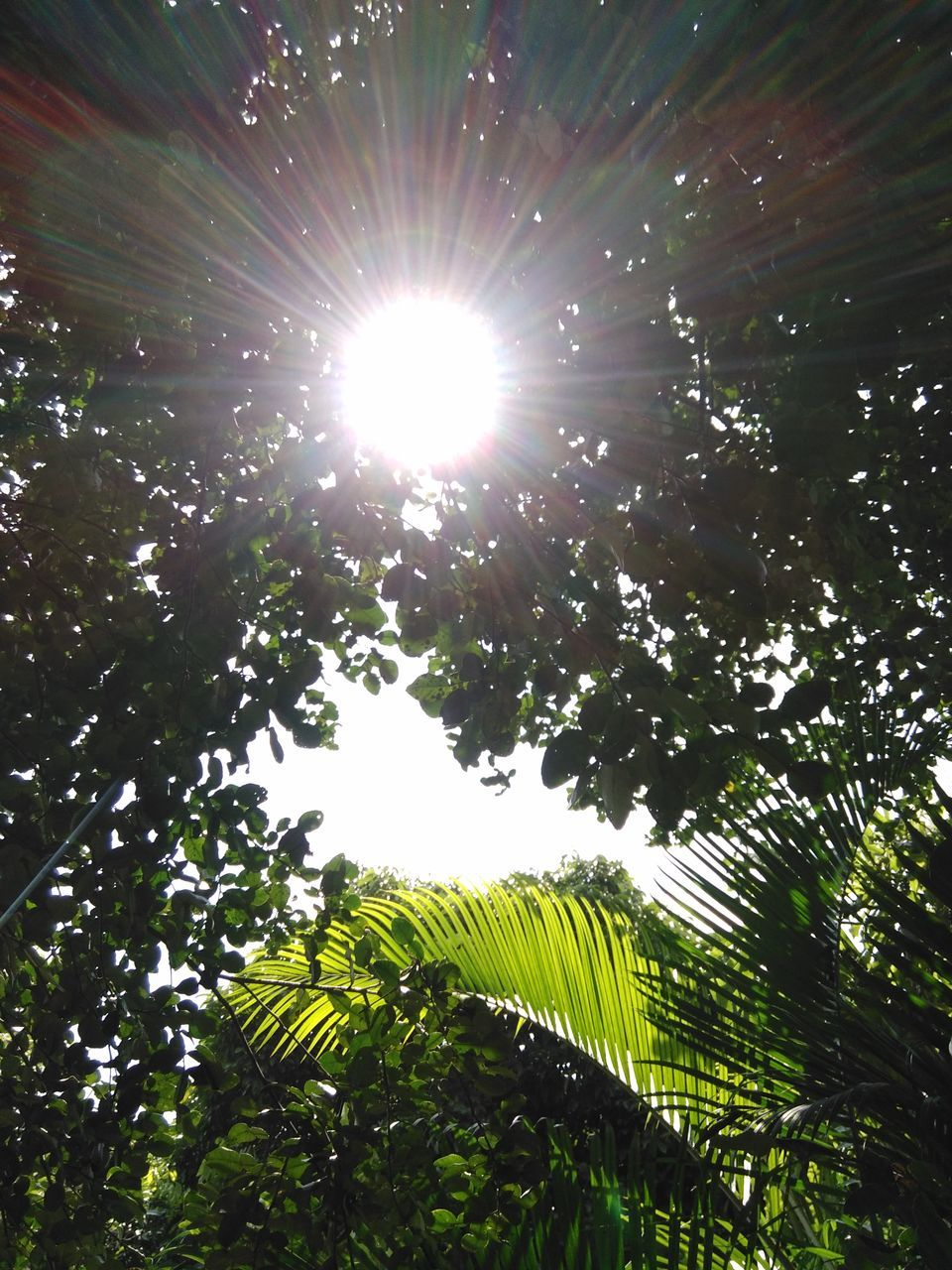 low angle view, tree, nature, growth, beauty in nature, sun, no people, leaf, green color, sunlight, outdoors, day, freshness, sky