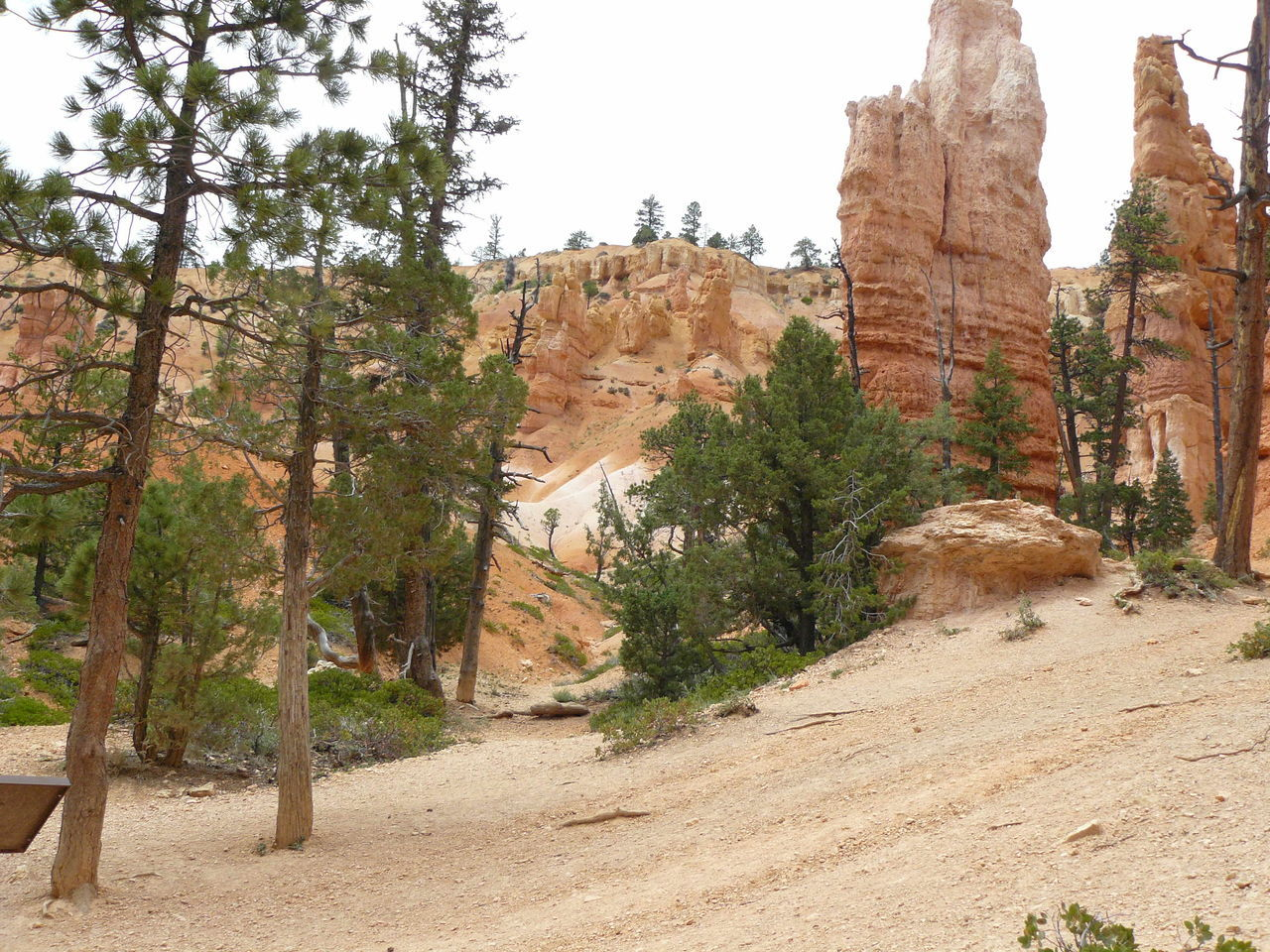 View Of Trees On Rock Formation
