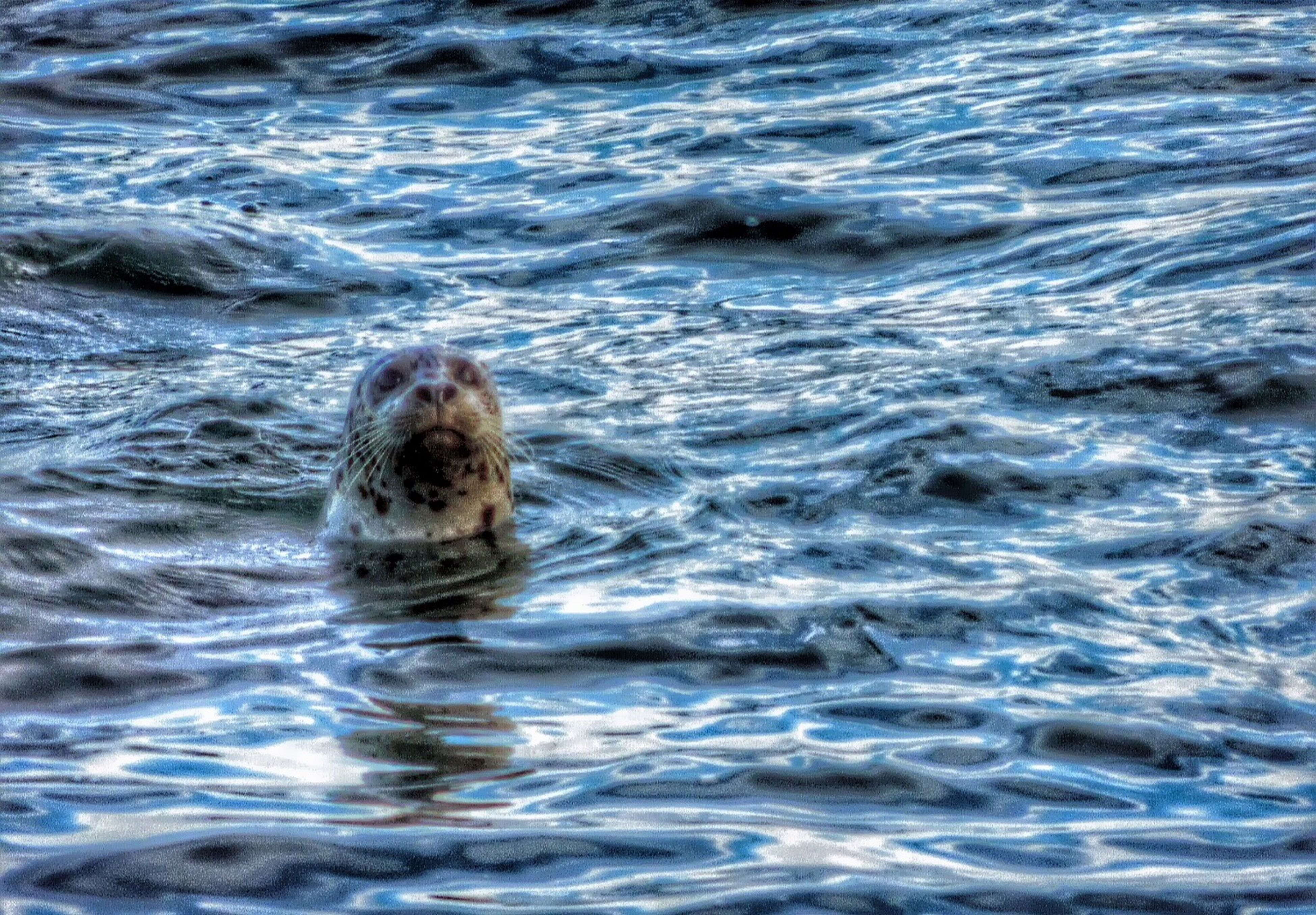 water, animal themes, one animal, waterfront, swimming, mammal, animals in the wild, wildlife, sea, rippled, dog, nature, splashing, pets, high angle view, day, motion, outdoors, two animals, no people