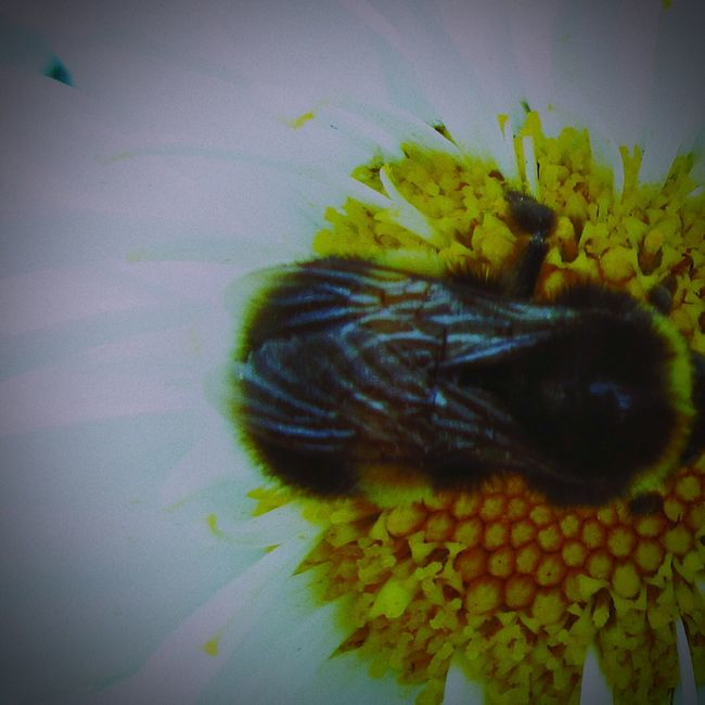 Bee And Flower Colour Photography Love To Take Photos ❤ Nature