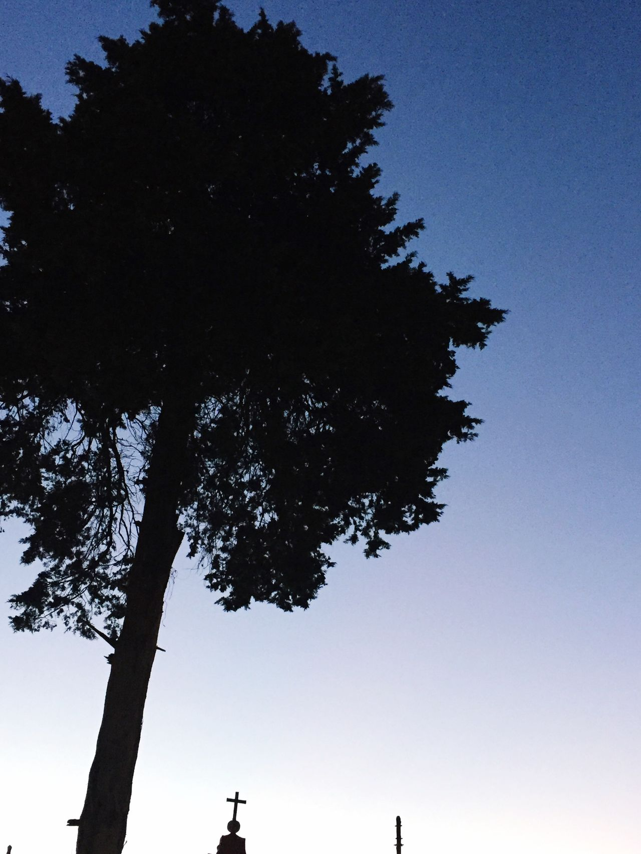 No quería creer en él, pero me dio motivos para hacerlo 💘VicMan árbol Nature Naturaleza Sentimientos Maravillas De La Naruraleza First Eyeem Photo