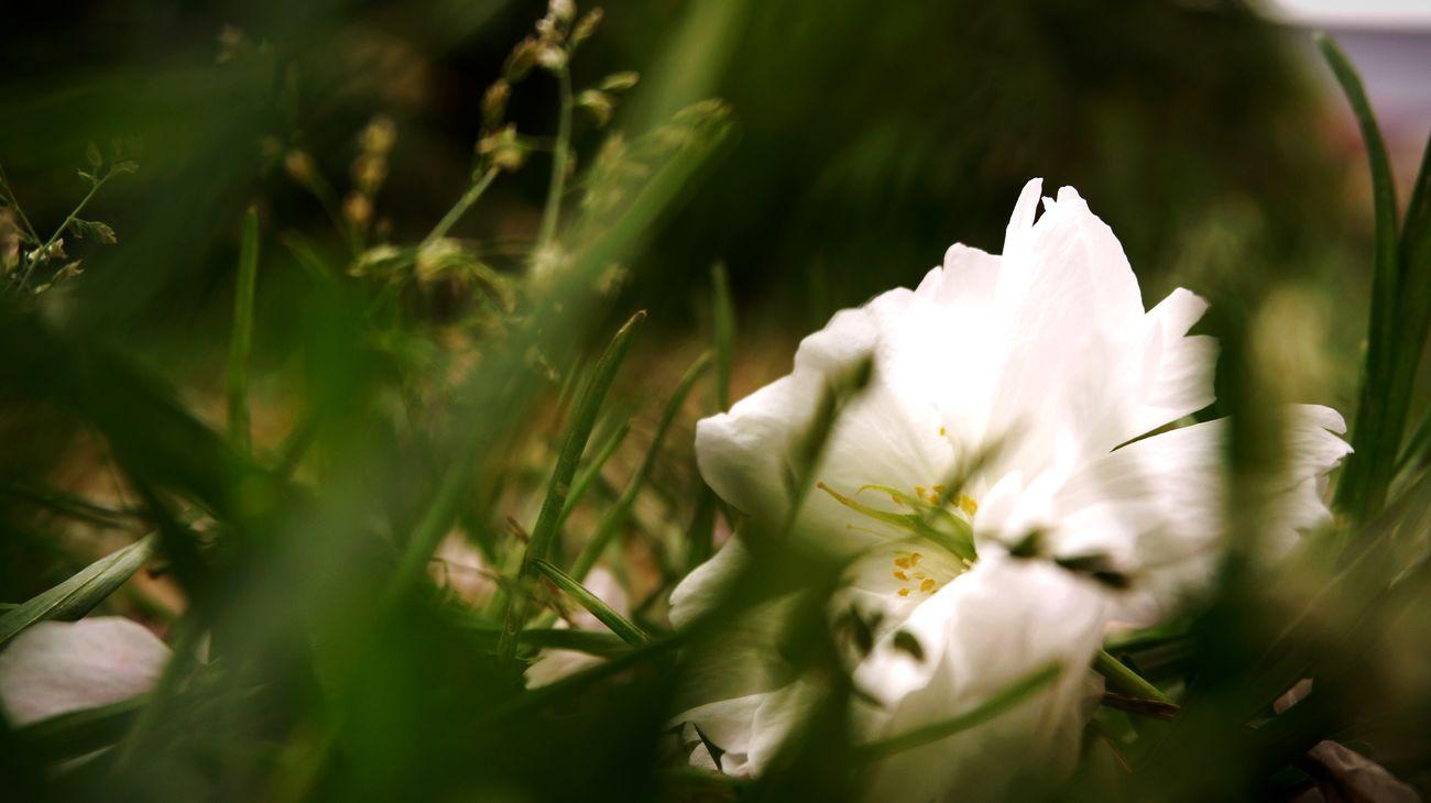 Spring Flowers Green