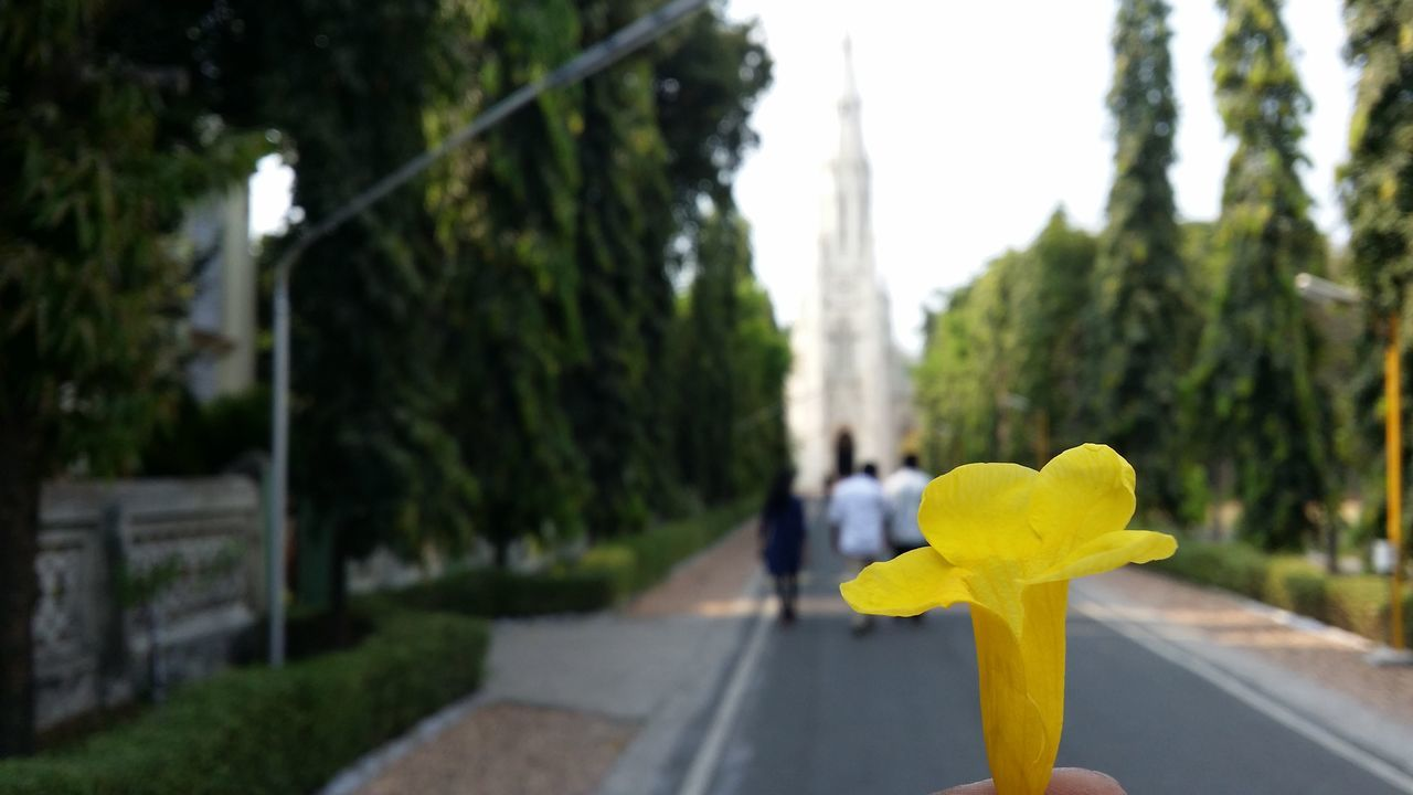 yellow, focus on foreground, flower, no people, outdoors, day, close-up, nature, sky