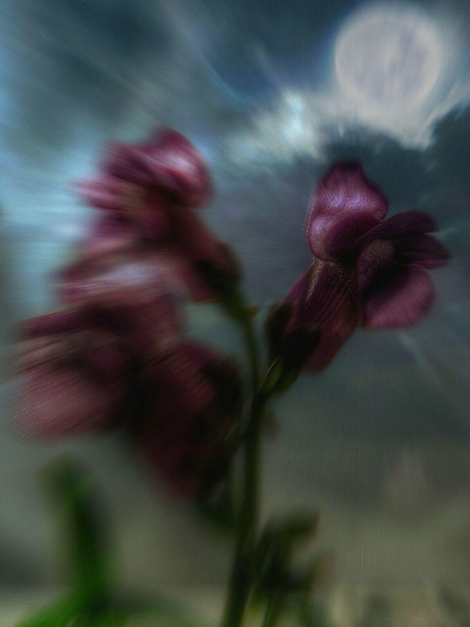 CreativePhotographer Editing Natureedited