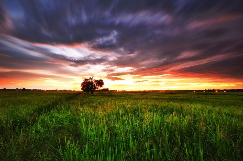 Sunset paddy field Sunset Sunrise Nature Sky Background Beauty Landscape No People Scenics Tree Paddy Rural Scene Outdoor Beauty In Nature Agriculture Thailand EyeEm Best Shots EyeEmBestPics Getty Images Eyeem Market EyeEm Gallery Getty X EyeEm Malaysia Long Exposure Business