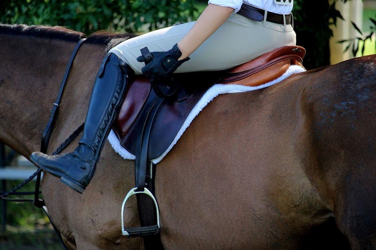 Horse Horseshow Stirrup Saddle