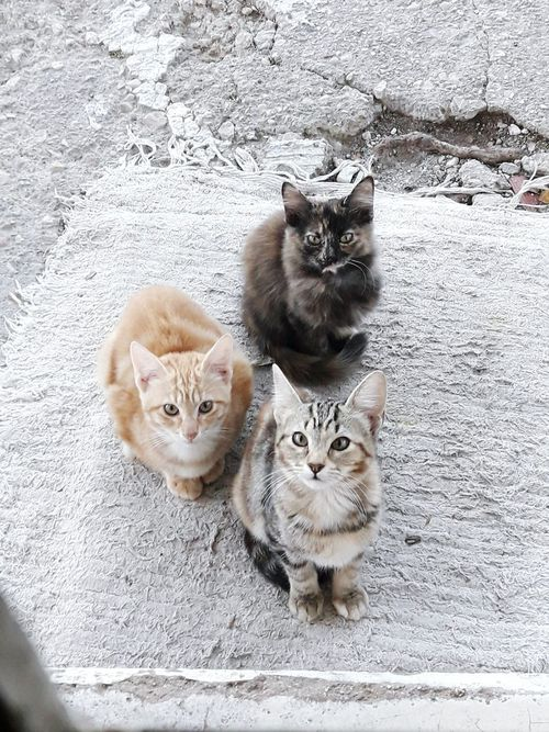 Looking At Camera Animal Themes Mammal Togetherness Portrait Pets Feline Nature Outdoors Domestic Animals Domestic Cat Day No People