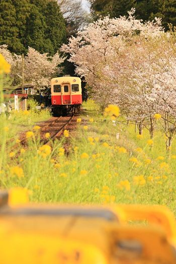 Transportation Train - Vehicle Yellow Public Transportation 飯給駅 小湊鉄道 Railroad Track Mode Of Transport Rail Transportation Tree Journey Land Vehicle Nature Travel Day Plant Outdoors No People Beauty In Nature Locomotive