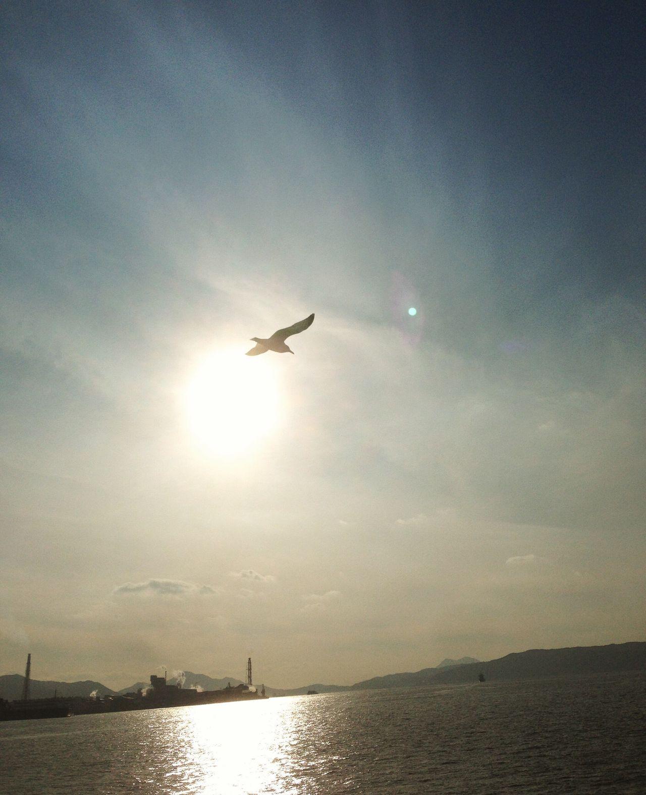Japan/Hiroshima Sky Ocean Bird Mountain Sun Moon Japan Hiroshima Kure 日本 広島 呉 山 海 鳥 かもめ 太陽 月