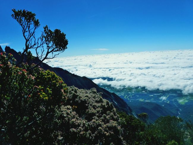 Land below the wind! Beauty In Nature Nature Tree Scenics Landscape Outdoors Sky EyeEmNewHere Miles Away Sabah Rock Mountain Grazing Beauty In Nature Sabahmalaysia Kinabalu Mount Tranquil Scene Travel Destinations Mountain Range Borneoadventure Cold Temperature Kinabalumountain Personal Perspective Clear Sky Cloud - Sky