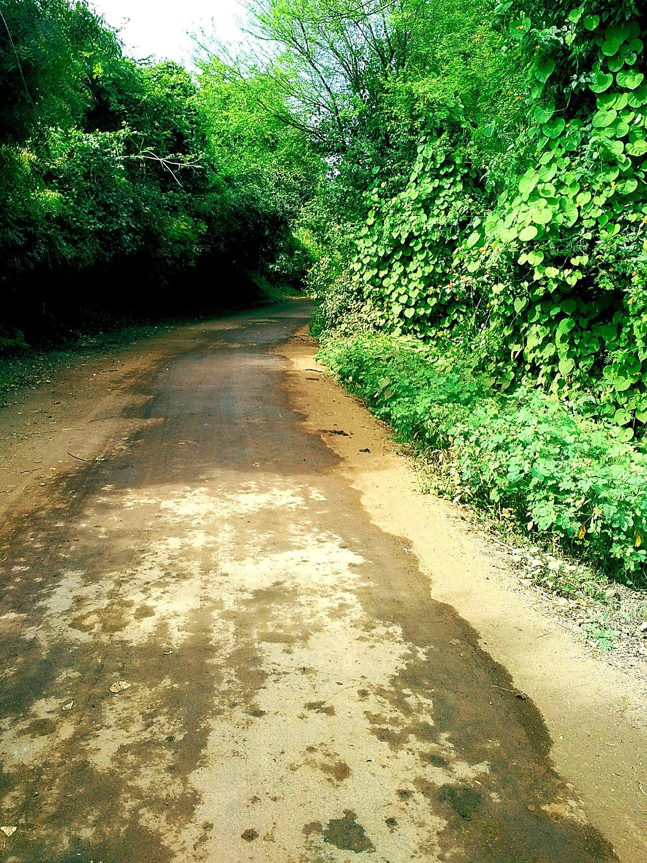 Way To Farm rural scene