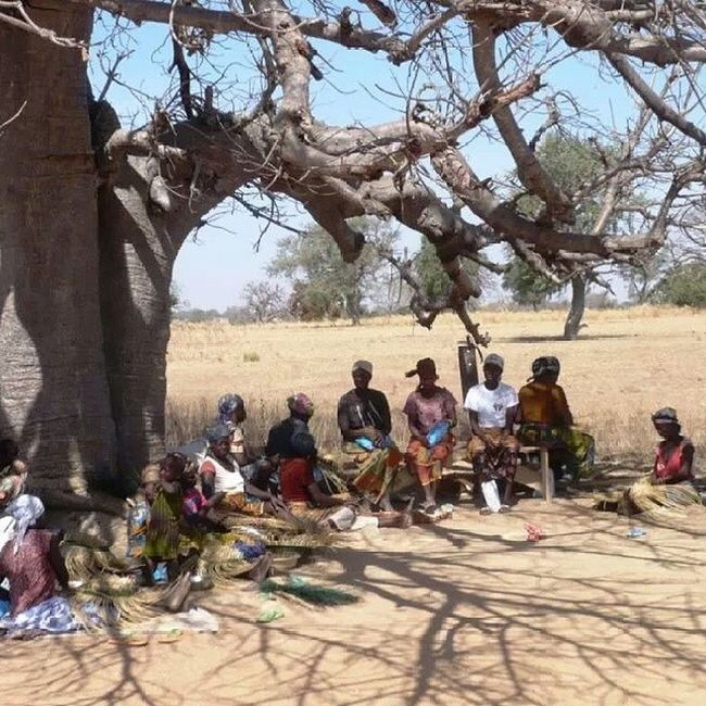 Another group of women we met in a village to talk about prices and the straw baskets market. This is the dry hot season. Baobabs are wonderful trees. My African Ents . Wonderful women again making straw baskets. Bolgabaskets Glish Africa Ghana Bolga