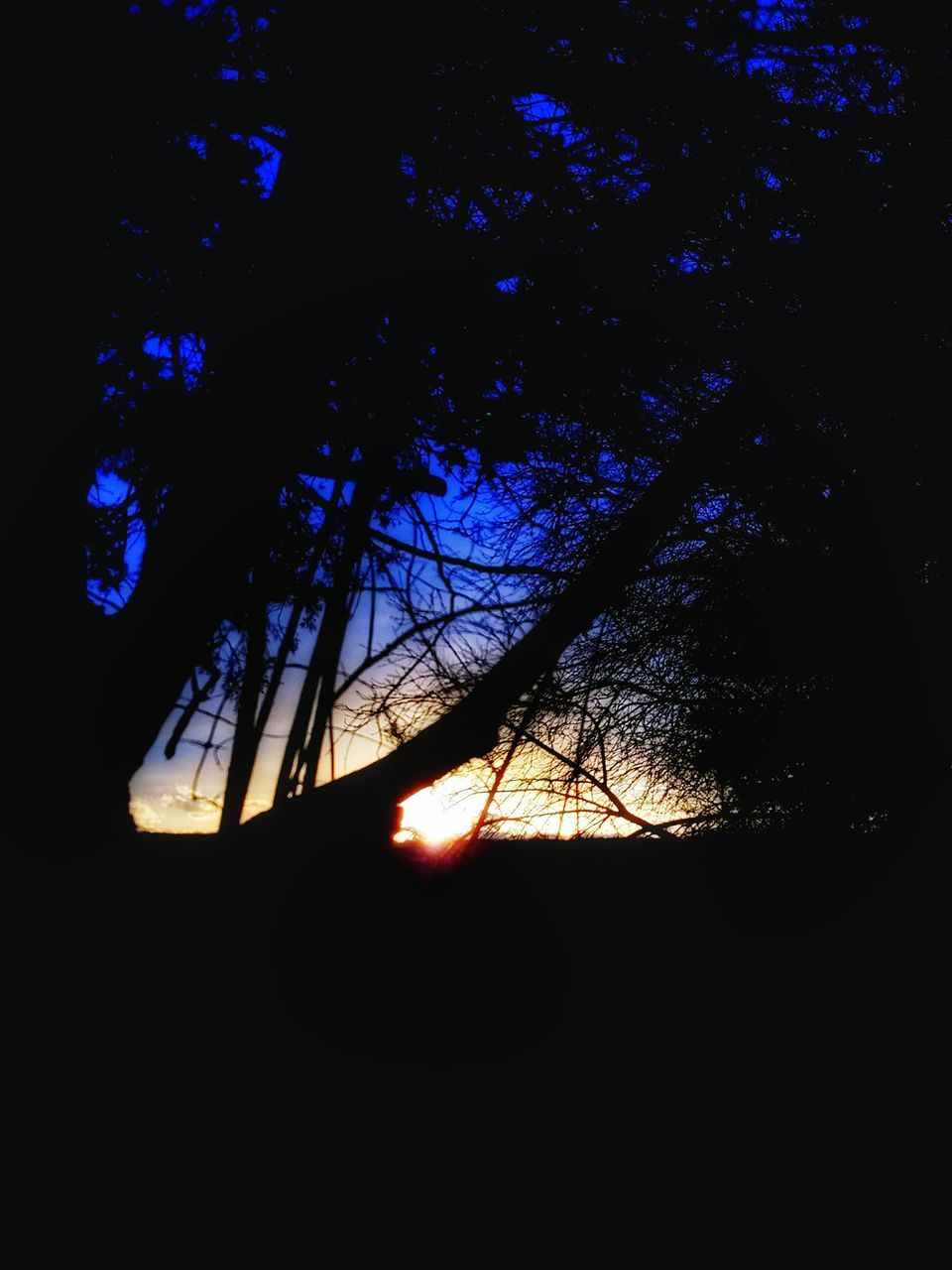 tree, silhouette, low angle view, branch, no people, nature, beauty in nature, outdoors, sky, day