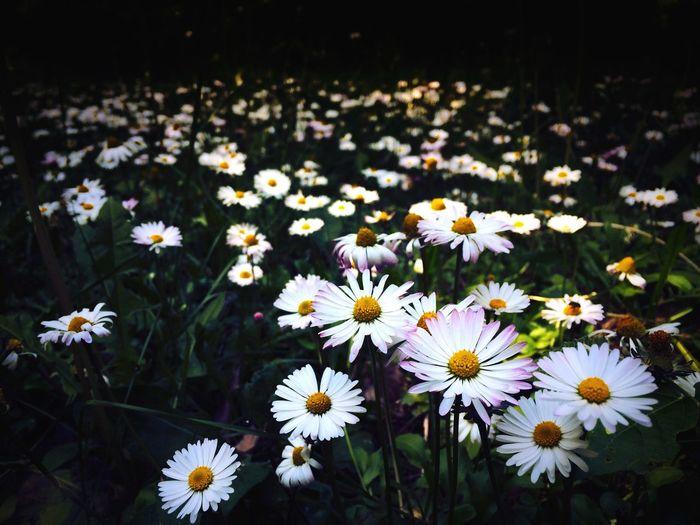 flowers Flower Flowers Hundred Flower Nature