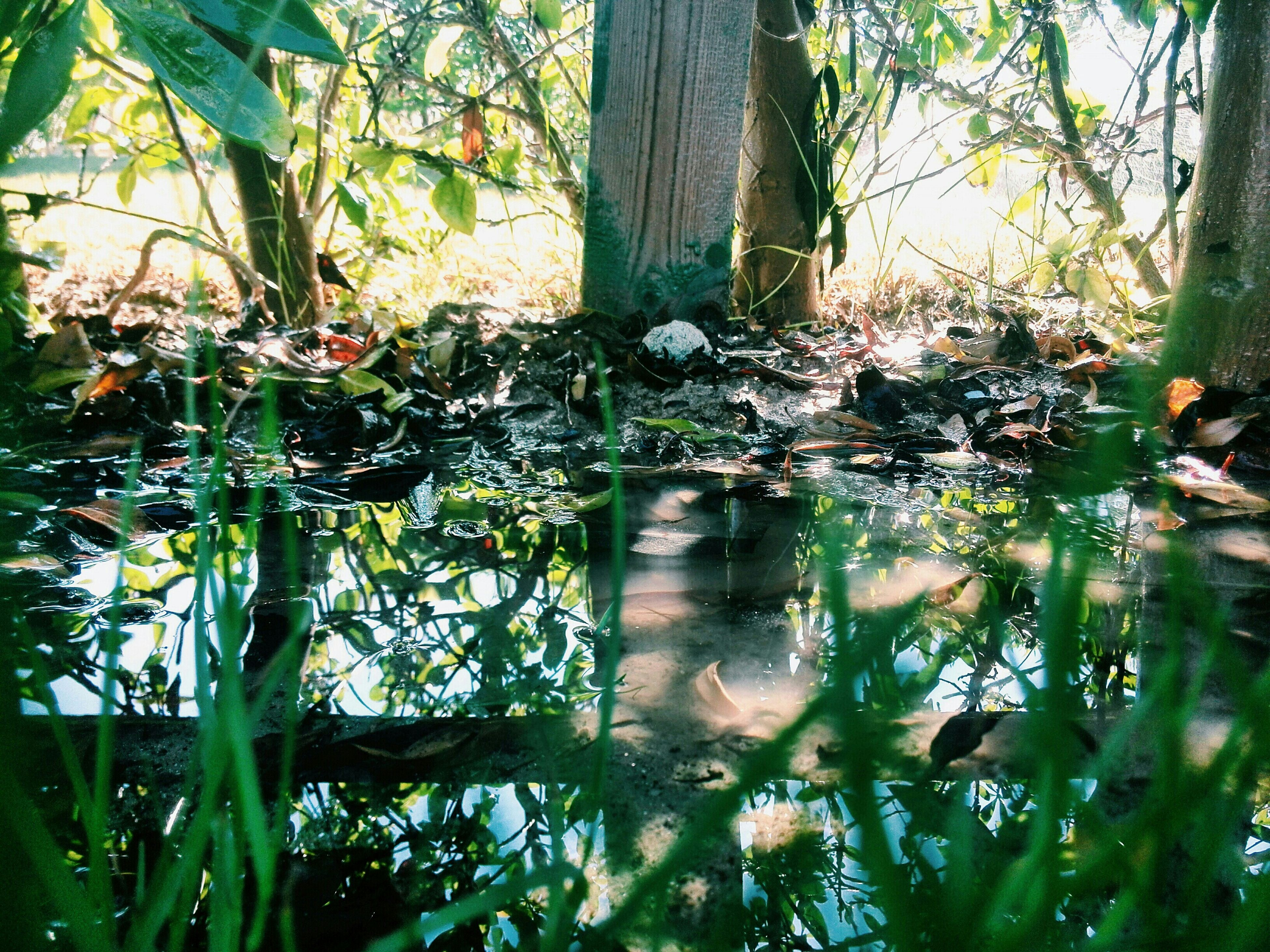water, tree, growth, tree trunk, tranquility, reflection, forest, leaf, nature, plant, green color, lake, beauty in nature, branch, tranquil scene, pond, day, scenics, outdoors, grass