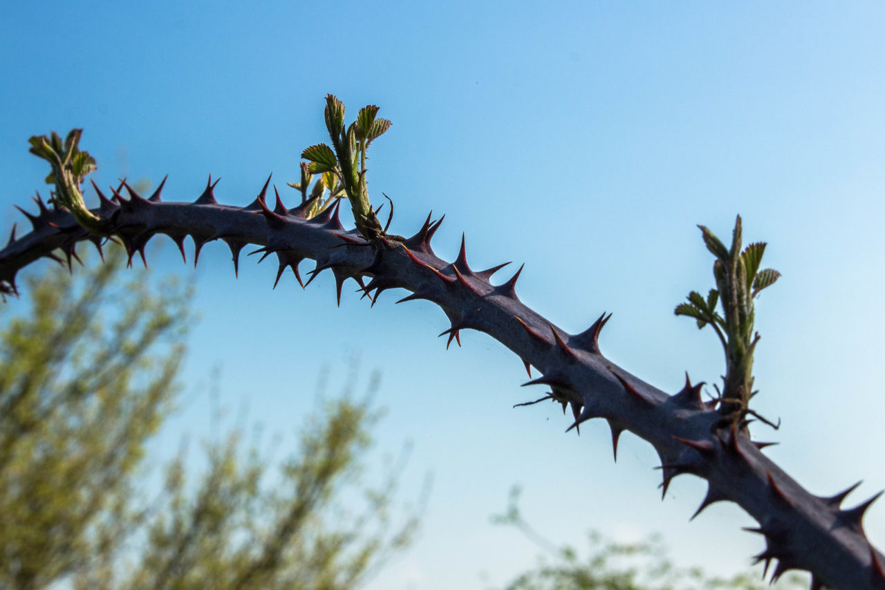 Thorny arch Arch Close-up Low Angle View Nature Plant Sharp Spiky Thorn Thorns