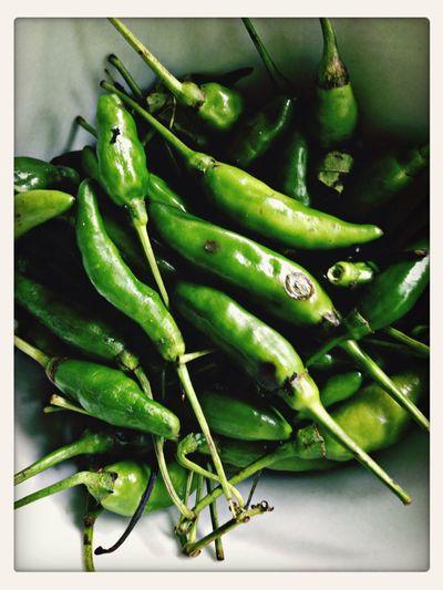 Green cool chili non pepper Boarding