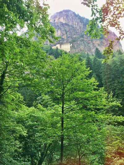 Outdoors Forest Church Sumela Sümela Manastırı Nature Green Color Tree Mountain Lifestyles