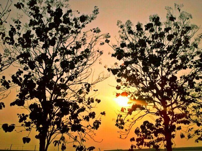 ปล่อย..ปล่อยเขาไปเถอะ.. Trees Enjoying The Sun Thailand_allshots