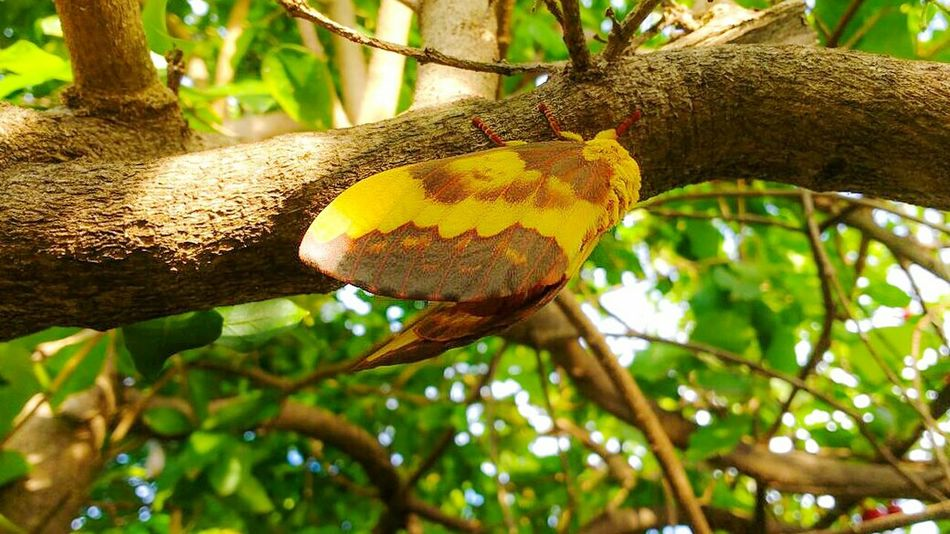 Baterfly, Baterfly Garden Tree Trunk Beauty In Nature Day Nature One Animal Animal Themes Animal Wildlife Summer Nature