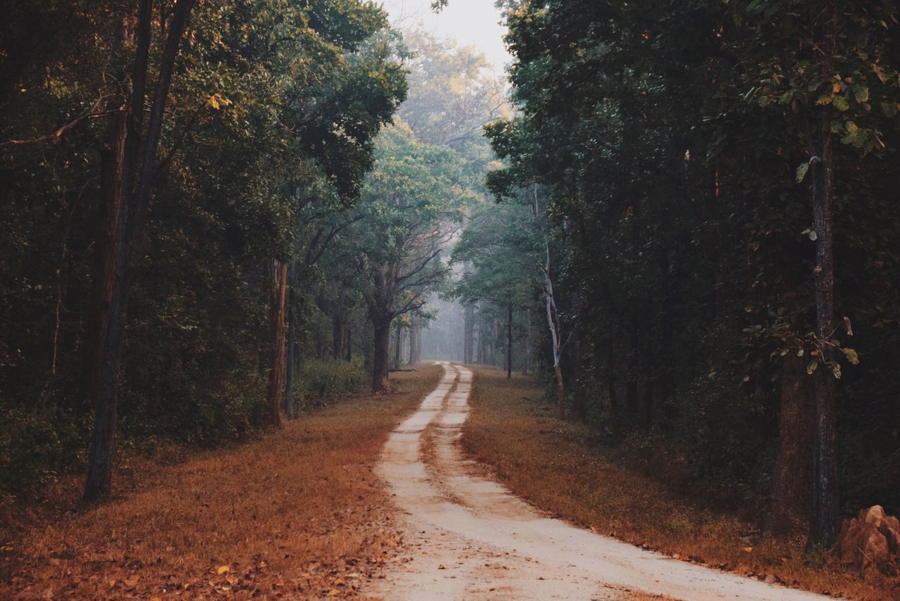 tree, the way forward, forest, nature, diminishing perspective, tranquil scene, no people, road, tranquility, growth, landscape, day, scenics, plant, outdoors, beauty in nature