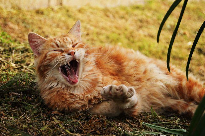 Cat Lovers Cat Domestic Animals Nature Feline Animal Themes Animals Animal Animal Love Orange Arancione Cats 🐱 Beatiful Nature Domestic Animal