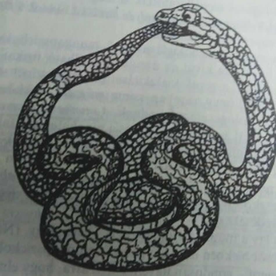 Budapest, Hungary Budapest Book Books Illustration Snake ♥ Snake Reptile Dietfood Diet Diet Hard Vegan Suicide Mission