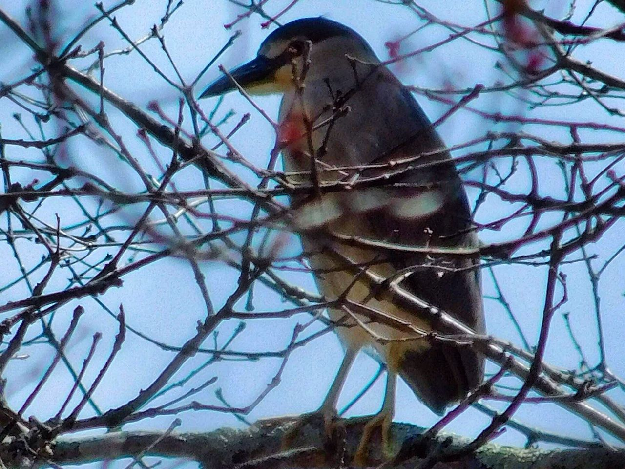 Animal Themes Animals In The Wild Bird One Animal Branch Animal Wildlife No People Perching Nature Day Bird Photography Birds Of EyeEm  Birds_collection Birdwatching